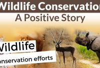 Wildlife conservation efforts in india 2020